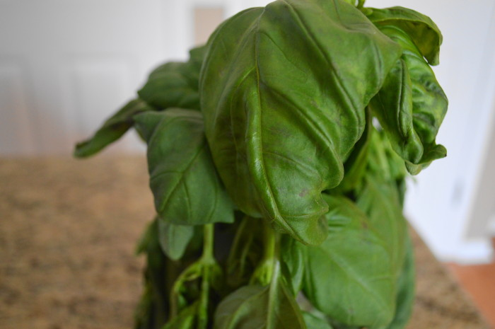 The star of five nut pesto sauce, gorgeous fresh basil!