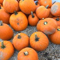 Oh, how I love pumpkin!