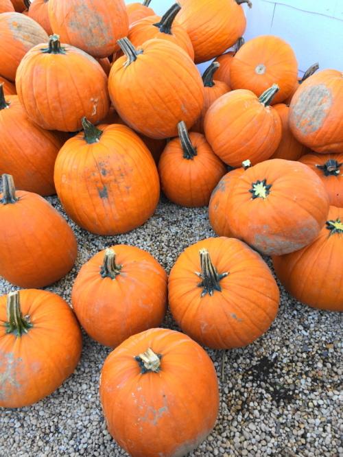 Oh, how I love pumpkins!